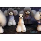 Teddy Model Dog Head